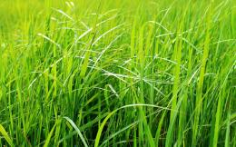 beautiful green grass hd wallpaper jpg 650