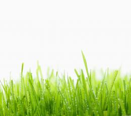 Green Grass HD Desktop 2160x1920 Samsung Galaxy S4 Wallpaper 1773