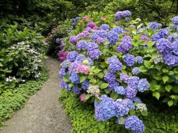 1024x768 Strafford Hydrangea desktop PC and Mac wallpaper 600