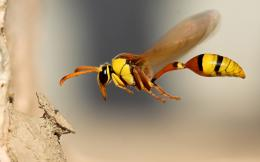 flying insects hd wallpapers fullscreen background images insects 1616