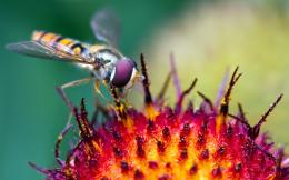 Insects Wallpapers 1061