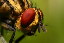 insects HD Wallpaper of Insects & Bugs 164