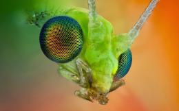 Insect HD Funny Wallpapers 1784