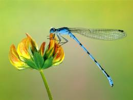 beautiful Insects HD Wallpapers 927