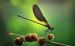 insects dragonflies hd wallpapers fresh new images insects fullscreen 446