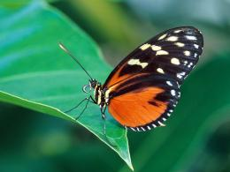 insects butterfly cool hd wallpapers high resolution best images 1961