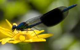 firefly insects hd wallpapers insects top images desktop fullscreen 487