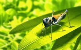 blogspot com 2014 01 insect hd funny wallpapers html 1394