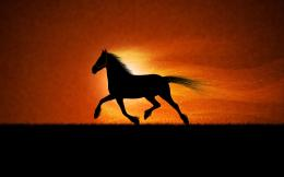 running horse desktop hd new wallpapers for background 356
