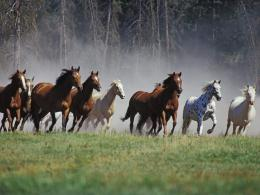 1024x768 Horses running desktop PC and Mac wallpaper 668