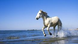 Running Horse HD Wallpapers 175
