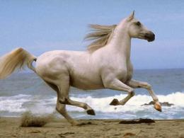White Horse Running Desktop Wallpaper Hq 1779