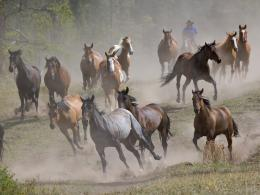 Running Horses Wallpapers for Desktop Backgrounds 1496