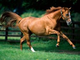 Running Horse Wallpapers 02 1121