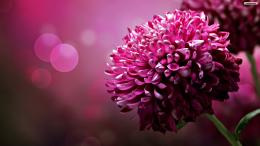 Purple Flower HD Wallpapers 534