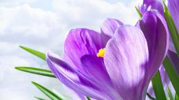 This incredible Lavender Color Flower Hd Desktop Wallpaper will fit 1969