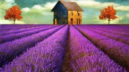 with lavender flowers hd wallpapers lavender flowers wide wallpapers 295