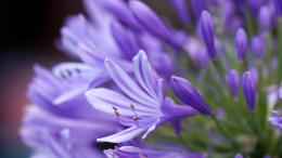 Take a look at this Lavender Hd Flower Hd Desktop Wallpaper which will 1491