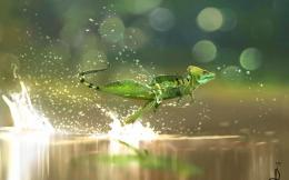 Lizard Running On Water wallpaper 862