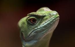 reptile wallpaper lizard wallpapers 2880x1800 563
