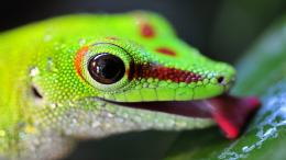 Lizard HD Wallpaper 6 1233