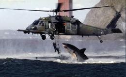 White Shark Attacking Diver Helicopter Pictures HD Wallpaper 308