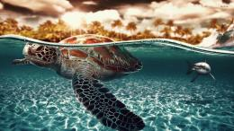 14650 sea turtle and shark 1920x1080 animal wallpaper jpg 610