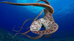 Related Post To Octopus HD Desktop Wallpaper 949