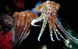 octopus wallpapers 1384