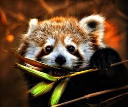 Sweet Red Panda Wallpaper iPhone Wallpaper with 1024x859 Resolution 1562