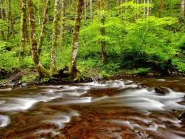 River Nature HD Wallpapers 790