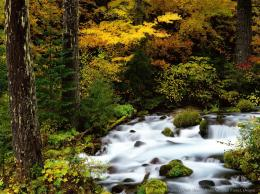 River Nature HD Wallpapers 1967