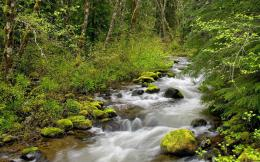 forest river wallpaper rivers nature wallpaper 1280 800 widescreen 1316