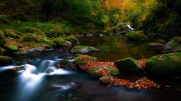 nature wallpapers, autumn, forest, leaves, the river 1123