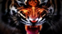 Roar Wallpaper and make this wallpaper for your desktop, tablet, and 1306