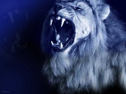 lion roar wallpaper lion wallpaper desktop lion wallpaper download 353