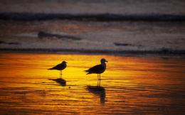 Seagull HD Wallpapers 504