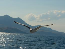Seagull HD Wallpapers 678