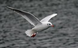 Seagull HD Wallpapers 1711