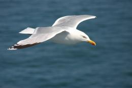 Seagull Wallpaper 635