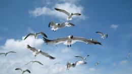 Seagull HD Wallpapers 667