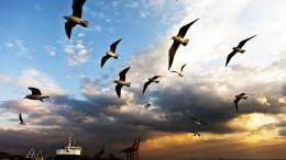 Seagull, Bird, Clouds 313