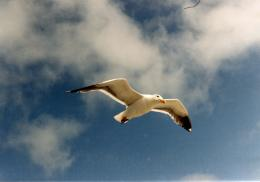 jonathan livingston seagull hd wallpapers jpg 1398