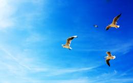 Seagulls in Flight 735