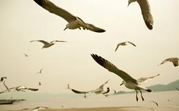 Seagull HD Wallpapers 938