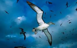 Photo of flying seagulls | HD seagull wallpaper 261