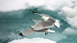 Seagull HD wallpapers 1139