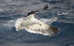Seagull HD Wallpapers 822
