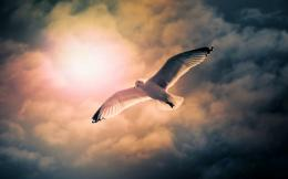 Flying seagull HD Wallpaper 1920x1080 Flying seagull HD Wallpaper 476