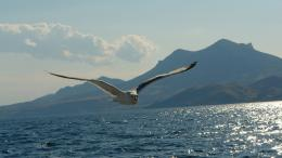 Seagull Above Lake Wallpapers HDAnimals 1156